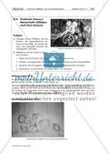 Praktische Klausur: Meisterhafte Stillleben nach Paul Cézanne / Die Kunstauffassung von Paul Cézanne Preview 1