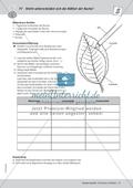 Pflanzen - Versuch zur Unterscheidung der Blätter von Buchen Preview 2