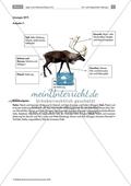 Das Leben als Jäger in der Altsteinzeit: Jagen in der Altsteinzeit Preview 4
