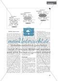 Fabel-hafte Grammatik - Grammatikwiederholung mit den Phaedrusfabeln Preview 6