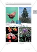 Biologie_neu, Sekundarstufe I, Pflanzen, Samenpflanzen, Fortpflanzung, Anatomie und Funktionen der Wurzel