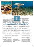 Die Korallenküsten der Tropen sind in Gefahr - Drohende Gefahr irreversibler ökologischer Schäden Preview 2