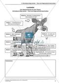 Stationenarbeit Tier- und Gegenstandsbeschreibung: Laufzettel Preview 1
