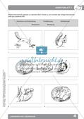 Biologieunterricht auf dem Schulhof - Lebewesen und Lebensraum Preview 6