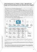 Genetik an Stationen: Regeln und Mechanismen Preview 12