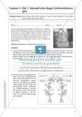 Genetik an Stationen: Regeln und Mechanismen Preview 7