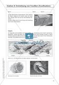Evolution an Stationen - Die Frühzeit der Erde und Fossilien Preview 16