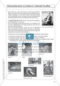 Evolution an Stationen - Die Frühzeit der Erde und Fossilien Preview 20