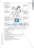 Evolution an Stationen - Ähnlichkeiten und Verwandtschaften Preview 21