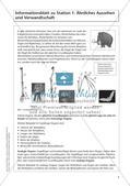 Evolution an Stationen - Ähnlichkeiten und Verwandtschaften Preview 8