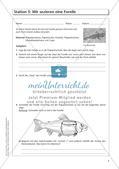 Der Körperbau der Fische Preview 6
