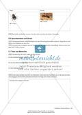 Interpretieren von Texten – Phaedrus: Formica et Musca Preview 3