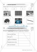Längen, Umfang und Flächeninhalt: Materialien in zwei Differenzierungsstufen Preview 6
