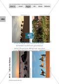 Der Lebensraum Wüste: Bilinguales Material Preview 16
