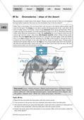 Der Lebensraum Wüste: Bilinguales Material Preview 6