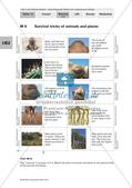 Der Lebensraum Wüste: Bilinguales Material Preview 8