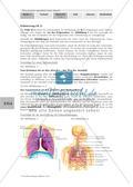 Lungenbau und Weg der Atemluft Preview 10