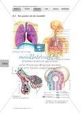 Lungenbau und Weg der Atemluft Preview 8