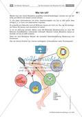 Biologie_neu, Sekundarstufe I, Der Mensch, Bau und Funktion des Nervensystems, Sinnesorgane, Nervenzellen und Synapsen, Vegetatives Nervensystem, Willkürliche Bewegungen und Reflexe, Rezeptoren und Reiz-Reaktionsschema, Rückenmark, Impulse, Herz, Nervenzelle, Muskel, Sinnesorgan