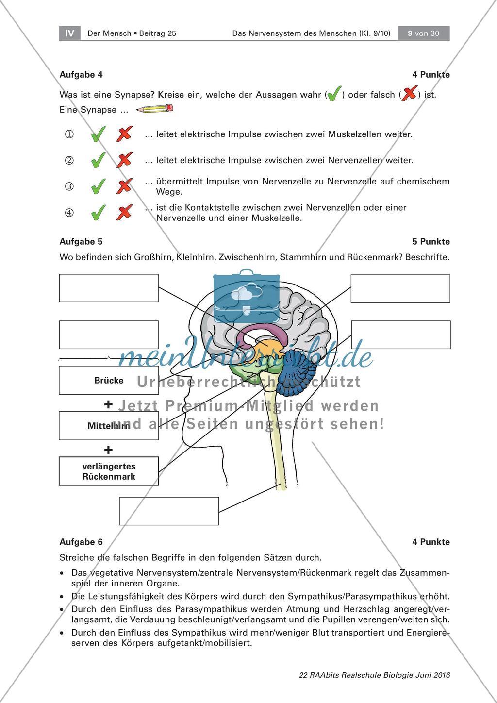 Test zum Nervensystem des Menschen   meinUnterricht