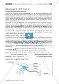 Test zum Nervensystem des Menschen Preview 4