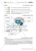 Test zum Nervensystem des Menschen Preview 5