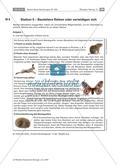 Strategien der Beutetiere und Jäger Preview 6
