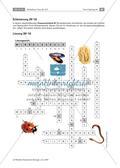 Wirbellose Tiere im Vergleich Preview 15