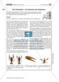 Wirbellose Tiere im Vergleich Preview 7