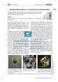 Wirbellose Tiere im Vergleich Preview 8
