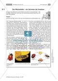 Wirbellose Tiere im Vergleich Preview 9
