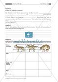 Der Hund: Sinnesleistungen und Verhalten Preview 14