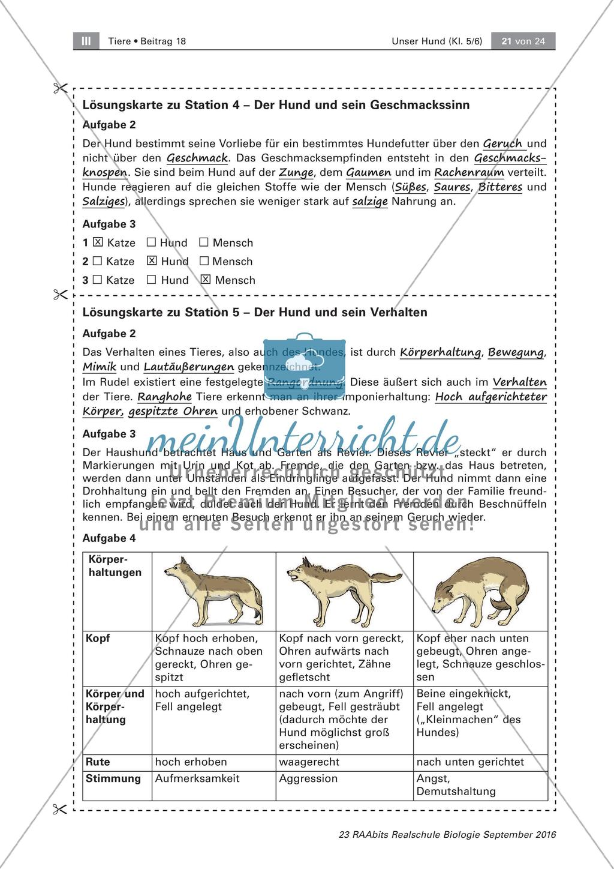Der Hund Sinnesleistungen und Verhalten   meinUnterricht