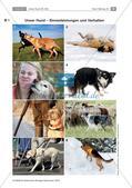 Der Hund: Sinnesleistungen und Verhalten Preview 6