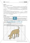 Der Hund: Sinnesleistungen und Verhalten Preview 9