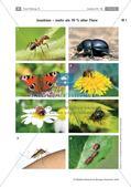Insekten: mehr als 70% aller Tiere Preview 1
