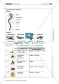 Insekten: Körperbau, Sinnesorgane, Flugtechnik, Atmung, Blutkreislauf und Nervensystem Preview 10