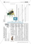 Insekten: Körperbau, Sinnesorgane, Flugtechnik, Atmung, Blutkreislauf und Nervensystem Preview 1