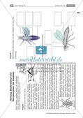 Insekten: Körperbau, Sinnesorgane, Flugtechnik, Atmung, Blutkreislauf und Nervensystem Preview 3