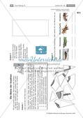Insekten: Körperbau, Sinnesorgane, Flugtechnik, Atmung, Blutkreislauf und Nervensystem Preview 5