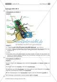 Insekten: Körperbau, Sinnesorgane, Flugtechnik, Atmung, Blutkreislauf und Nervensystem Preview 8