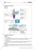 Insekten: Körperbau, Sinnesorgane, Flugtechnik, Atmung, Blutkreislauf und Nervensystem Preview 9