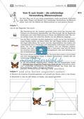 Insekten: Entwicklung Preview 1