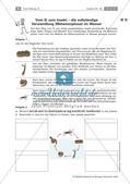 Insekten: Entwicklung Preview 3