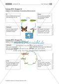 Insekten: Körperbau, Sinnesorgane und Entwicklung Preview 3