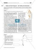 Aufbau einer Getreidepflanze und Getreidesorten Preview 1