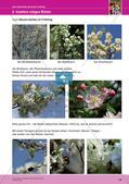 Jahreszeiten mit allen Sinnen erleben: Frühling Preview 30