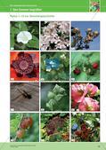 Jahreszeiten mit allen Sinnen erleben: Sommer Preview 14