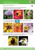 Jahreszeiten mit allen Sinnen erleben: Sommer Preview 19