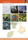 Erleben der Jahreszeiten mit allen Sinnen: Herbst Preview 16